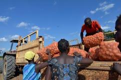 afrikanska bönder fotografering för bildbyråer