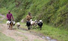 Afrikanska barn i Rwanda Arkivfoto
