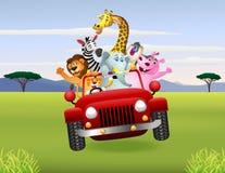 Afrikanska djur i röd bil Arkivfoton