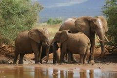 afrikanska elefanter Fotografering för Bildbyråer