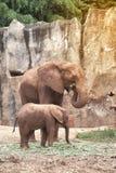 Afrikanska elefanter för moder och för son Royaltyfria Foton