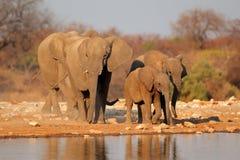 Elefanter på waterhole, Etosha Fotografering för Bildbyråer