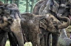 Afrikanska elefanter med behandla som ett barn elefanten between arkivbild