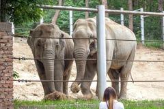 Afrikanska elefanter på den Tbilisi zoo, djur Royaltyfria Bilder