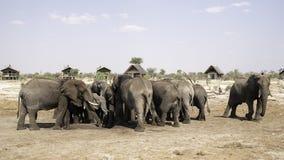 Afrikanska elefanter på elefanten sandpapprar waterhole, Botswana Royaltyfri Fotografi