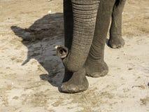 Afrikanska elefanter på elefanten sandpapprar waterhole, Botswana Arkivbilder