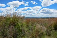 afrikanska grässlättar Royaltyfria Foton