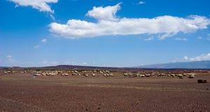 afrikanska kojor Arkivbild