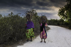 Afrikanska kvinnor som bär trä Arkivfoton
