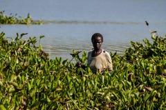 Afrikanska kvinnor som samlar vattenhyacinten i Lake Victoria Arkivbilder