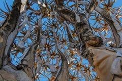 Afrikanska landskap - darrningträdskog Namibia Royaltyfria Bilder