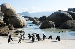 Afrikanska pingvinstenblocks strand Royaltyfri Bild