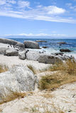 afrikanska strandstenblockpingvin Arkivbild