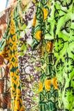 Afrikanska tyger från Ghana, Västafrika Royaltyfri Fotografi