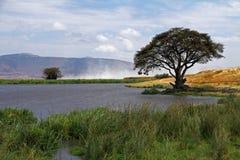 Afrikanskt bevattna spela golfboll i hål landskap Royaltyfri Bild