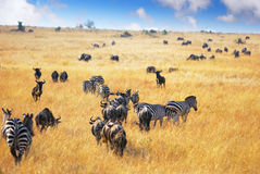 afrikanskt djurliv Royaltyfri Fotografi