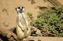 afrikanskt djurliv Arkivbilder