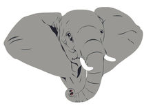afrikanskt elefanthuvud Royaltyfria Bilder
