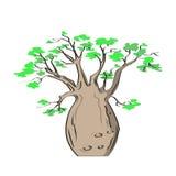 Afrikanskt iconic träd, baobabträd Adansoniagregorii royaltyfri illustrationer