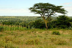 afrikanskt landskap Arkivbilder
