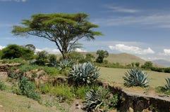 Afrikanskt landskap arkivfoton