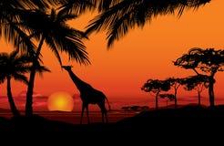 Afrikanskt landskap med den djura konturn Savannsolnedgångbackgro Arkivbilder
