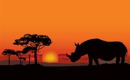 Afrikanskt landskap med den djura konturn Savannsolnedgångbackgro Royaltyfri Foto