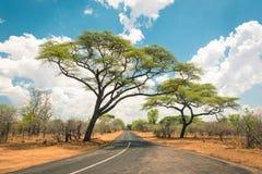 Afrikanskt landskap med den tomma vägen och träd i Zimbabwe Royaltyfria Bilder