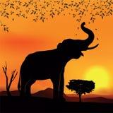 Afrikanskt landskap med elefanten och trädet Royaltyfri Bild