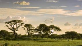 Afrikanskt landskap på solnedgångtid Fotografering för Bildbyråer