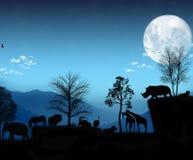 Afrikanskt ljus - blå atmosfär Arkivbilder