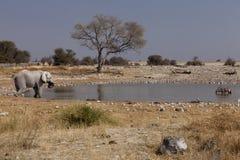 afrikanskt pölvatten Royaltyfri Fotografi