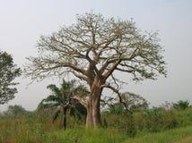 Afrikanskt trä stock illustrationer