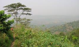 Afrikanskt trä, gömma i handflatan Arkivfoton