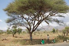 Afrikanskt träd och bikupor Fotografering för Bildbyråer