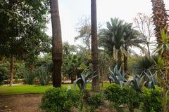 Afrikanträdgård arkivbild