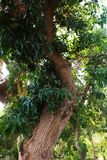 Afrikanträdgård arkivfoto