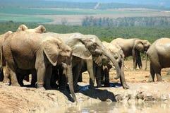 Afrikas wild lebende Tiere Stockbilder