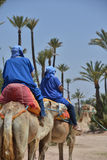 Afrique Maroc, Marakech, chameaux, Tourisme Arkivfoto