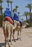 Afrique, Maroc, Marakech, chameaux, Tourisme lizenzfreies stockfoto