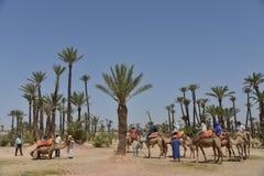 Afrique, Maroc, Marakech, chameaux, Tourisme Stock Images