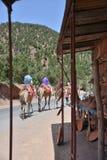 Afrique Maroc, Marakech, chameaux, Tourisme, kamel Royaltyfri Foto