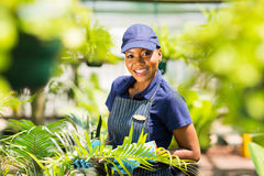 Afro american gardening. Portrait of young afro american nursery worker gardening Royalty Free Stock Photos