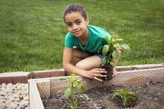 Afroamerikaner-Mädchen, das eine neue Anlage pflanzt Lizenzfreie Stockfotos