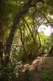 Afromontane forest in Kouga, South Africa Stock Images