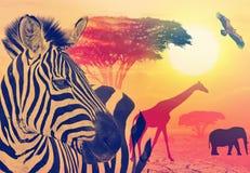 afryce przyrody Fotografia Stock