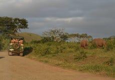 afryce safari Obrazy Royalty Free