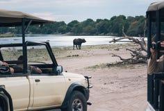 afryce safari Zdjęcie Royalty Free