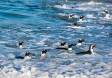 Afrykańscy pingwiny pływają w błękitne wody piana kipiel i ocean Zdjęcie Stock