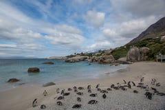 afrykańscy przylądka wyspy pingwiny robben miasteczko Fotografia Stock